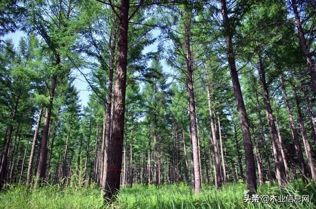 新森林法将实施 取消了木材运输许可审批