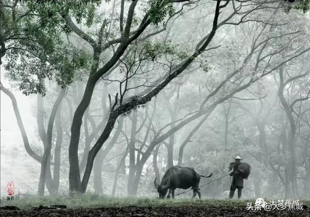 """霍童溪 """"百里画廊 曲水桃源"""" 未来可期"""