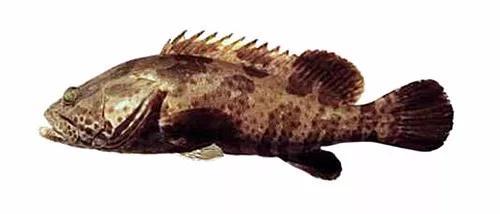 这44种名贵海鲜鱼类,见过5种的算广博,吃过10种的是美食家