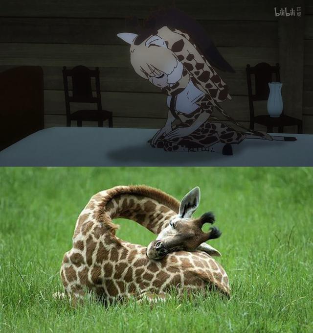 兽娘动物园 动画中的濒危动物们,现在究竟怎么样了? 兽娘动物园 ACG资讯 第7张