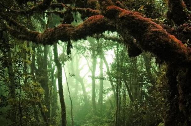 新疆发现最古老森林,距今已有3.71亿年历史-第2张图片-IT新视野