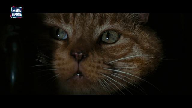 破案了,1979年經典《異形》中那只貓,原來有這樣的含義在
