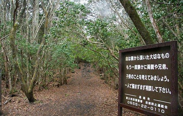 世界上最恐怖的森林:日本青木原森林-第3张图片-IT新视野