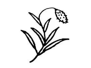 植物简笔画大全图片_可可