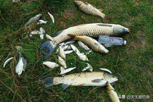 秋季钓鱼,你的钓位选对了吗?