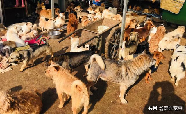 走访北京流浪猫狗救助站记录 - 日记 - 豆瓣