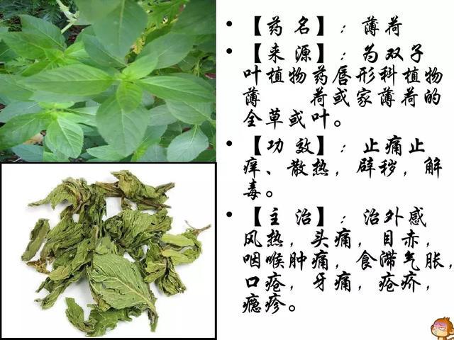 中药材植物名称及图片