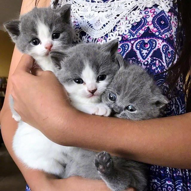 「猫咪头像」最萌不过小奶猫魔方甜点壁纸