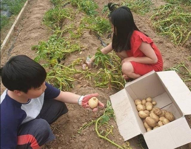 李英爱久违晒子女近照,9岁龙凤胎长高不少,蹲地挖土豆太接地气