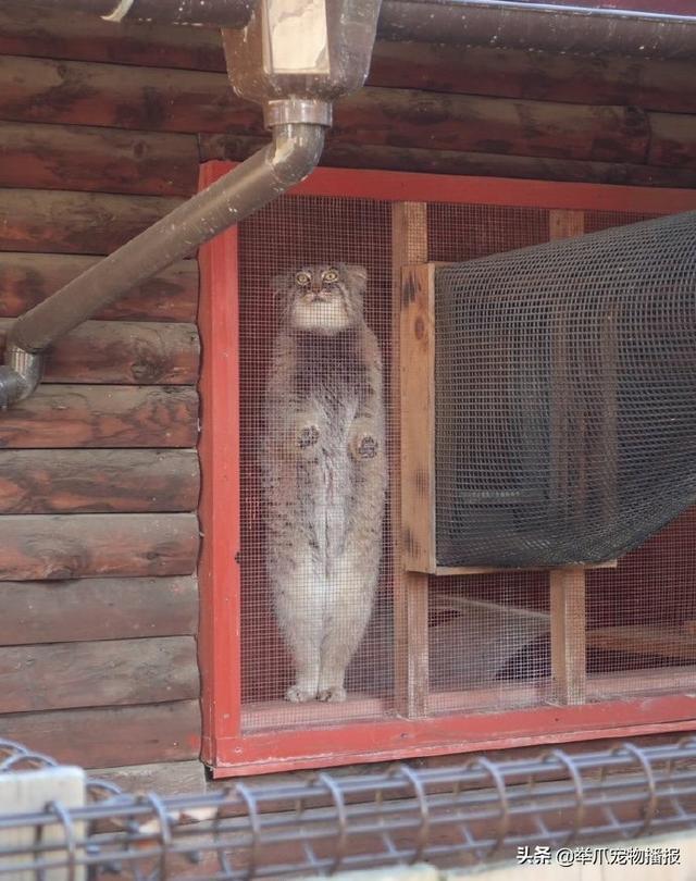 有一种猫咪是关不住的,请欣赏知名电影海报——喵申克的救赎-第7张图片-深圳宠物猫咪领养送养中心