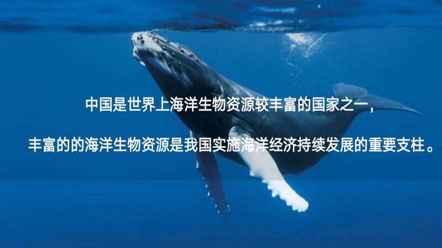 向海图强!中海洋联手海南中鼎布局国际海洋产业特色示范区