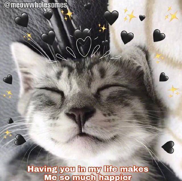 【猫咪背景图】ins风英文可爱贴纸猫咪风格 头像壁纸背景图魔方甜