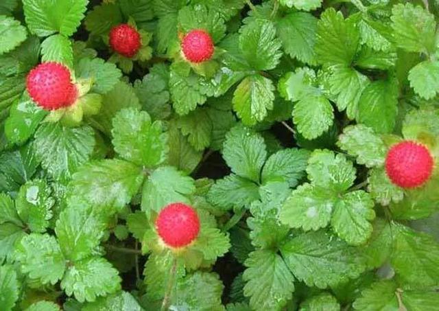 300种常见植物名称