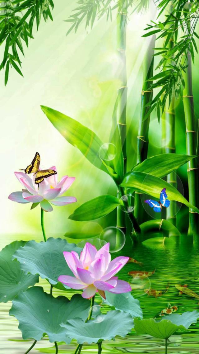 小清新花朵手机壁纸