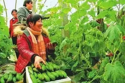 中国农业未来发展的9大趋势,抓住了,才能成功