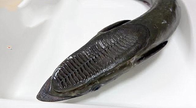 """男子买了条""""鞋底鱼"""",以为不能吃,做成菜后让人羡慕"""