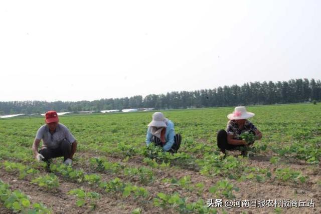 """民权:""""两栖农民""""有奔头"""