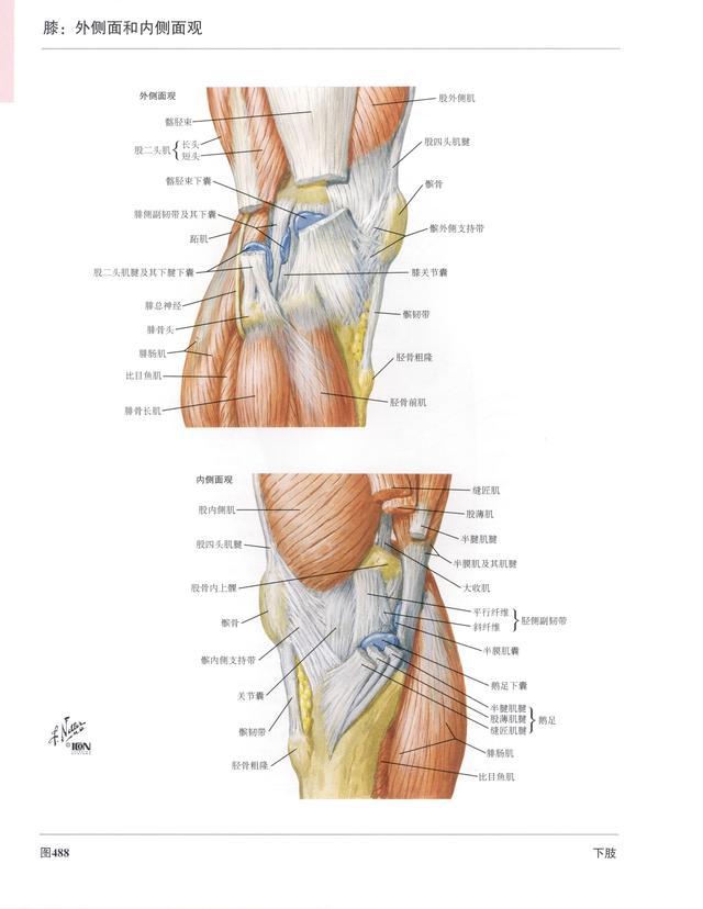上肢骨骼解剖图