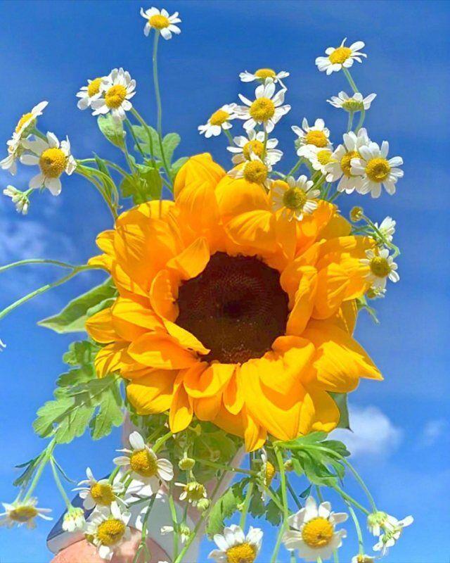 早晨发朋友圈的阳光句子:所有的美好都在七月,我在等,我坚信