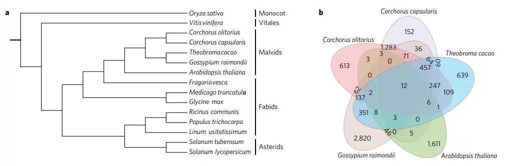 比较基因组学终将走向黄金时代