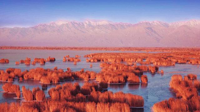 银川沙湖图片大全图片