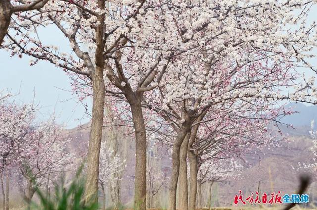 魅力东乡•唐汪之旅