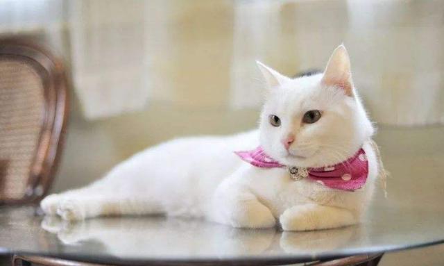 猫咪在家里上蹿下跳,这是天性使然,铲屎官可千万别去改变它们-第9张图片-深圳宠物猫咪领养送养中心