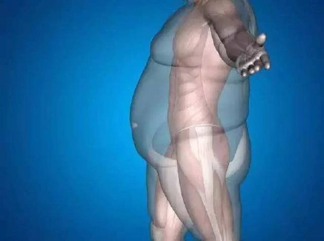 一斤肌肉和脂肪的对比