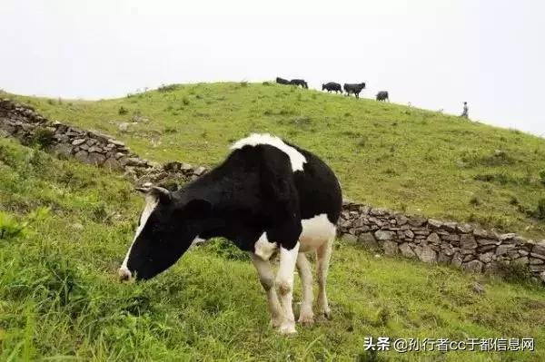 赣州于都县屏山牧场迷人的溪流瀑布,山间树木葱翠竹海茂密景很美