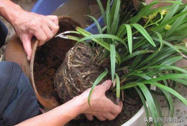 """立春后,""""3种垃圾""""扔盆里,肥效足,土壤疏松透气,关键不烂根"""