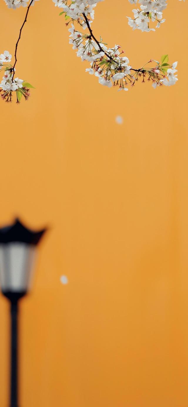 主题墙   小小一面墙,记满春天的样子-幼师宝典官网
