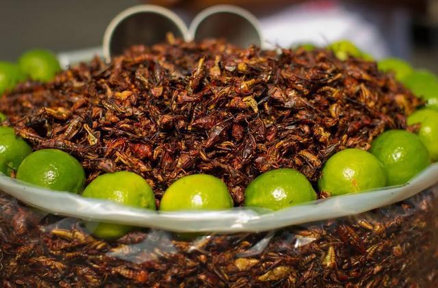 蝗虫和铁线虫 - 黄粉虫大麦虫养殖销售 - 简书