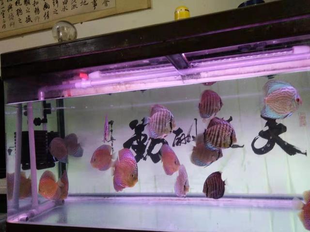 正常的标准换水频率是多少,为什么很多鱼友并不会去使用?