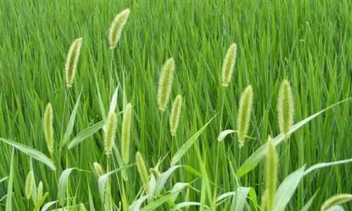 辽宁省主要野生观赏草资源及评价