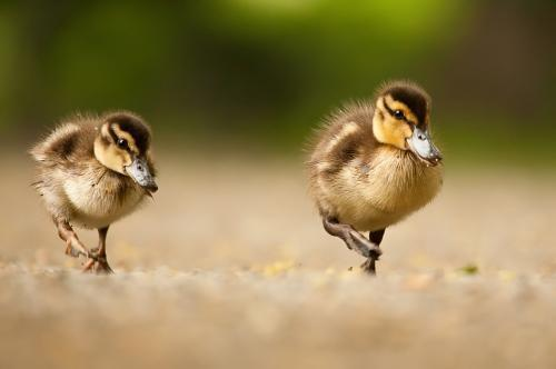万一有一天动物进化到新的阶段,会不会把我们也抓来供人游览观赏