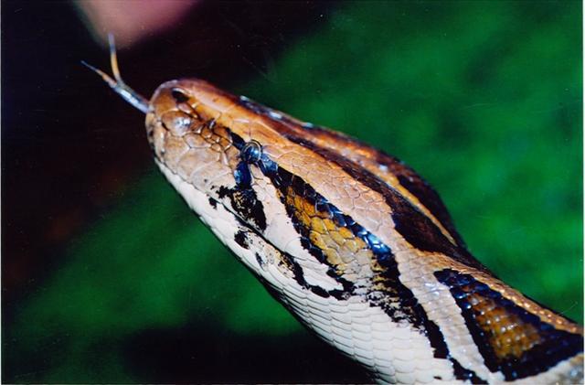 动漫蟒蛇图片大全大图
