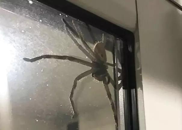 澳大利亚有多恐怖?看得让人后背发凉