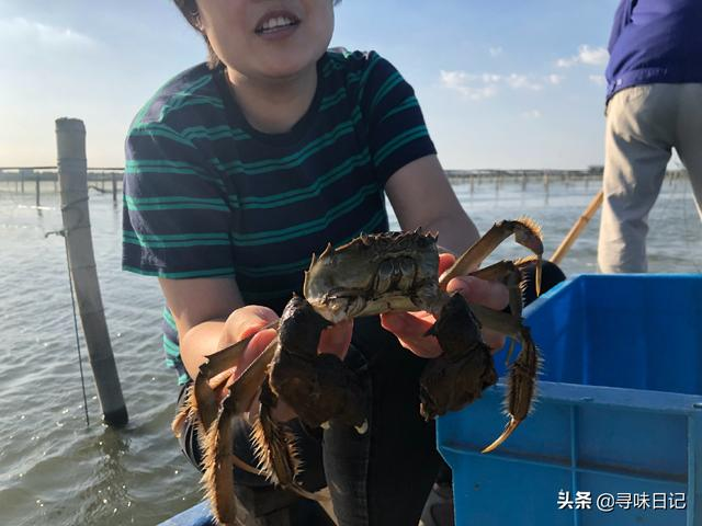 公母螃蟹的区别图片