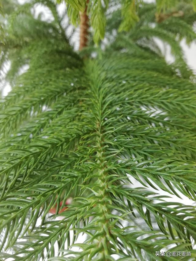零下60℃依然迎风挺立!一起走进不畏低温的优质抗寒树种!