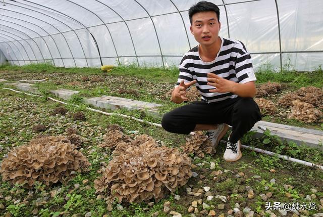 迁西栗蘑多少钱一斤