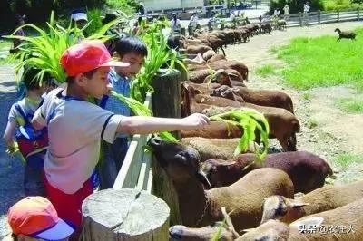 新型农庄综合体,如何掘金亲子农场?