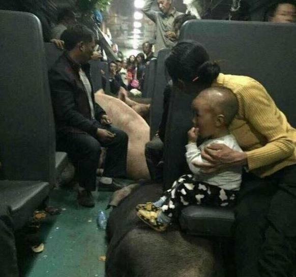 四川大凉山彝族村民,赶着一群猪乘坐绿皮火车,网友:实属无奈啊