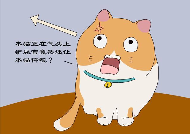 猫不开心时,铲屎官别增加猫的压力,避免3种与猫接触方式-第5张图片-深圳宠物猫咪领养送养中心