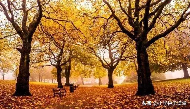 这些描写秋天的精美语段,孩子作文肯定用得上,收藏一下