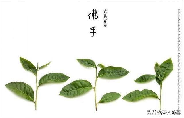 佛型梨貌似人参果 主人花六年栽种修成正果(图)_天下奇观_科学网