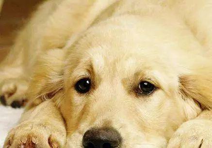失去一起生活12年老友,狗狗抑郁了2年,直到一只鸭子来到它身边