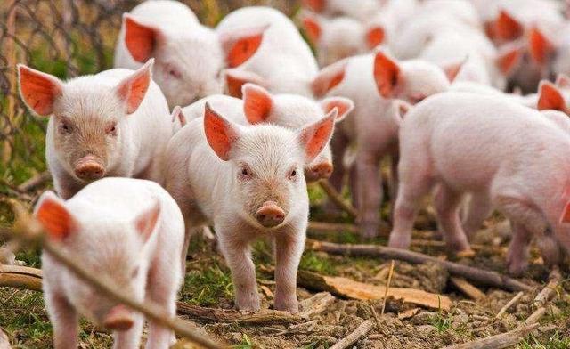 做地产比不过养猪,中国养猪首富身价2410亿,超过地产首富许家印