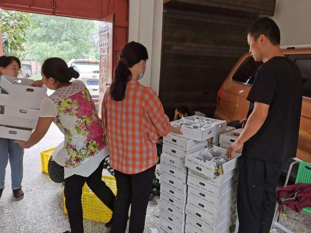 南瓜丰收却滞销 爱心社区来助农