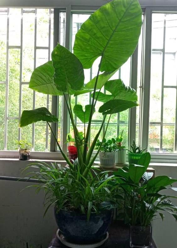 生命力顽强的植物盆栽