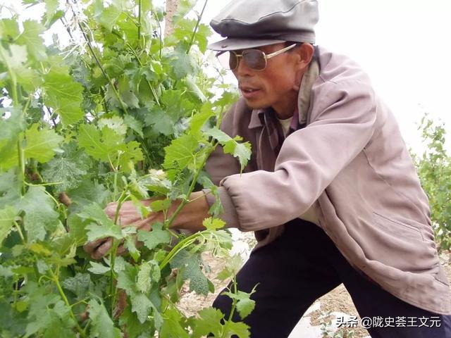 甘肃天祝,吐谷浑大墓发现高脚杯图案!西凉葡萄酒,杨贵妃的最爱